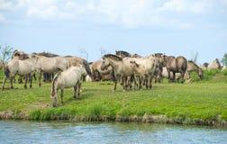 Άλογα στον υγρότοπο το καλοκαίρι Στοκ εικόνες με δικαίωμα ελεύθερης χρήσης