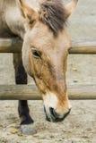Άλογα στο αγρόκτημα, που εξετάζει το άλογο Στοκ εικόνες με δικαίωμα ελεύθερης χρήσης