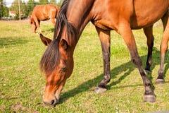 Άλογα στο αγρόκτημα Στοκ εικόνες με δικαίωμα ελεύθερης χρήσης