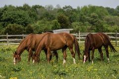 Άλογα στο αγρόκτημα στοκ εικόνα