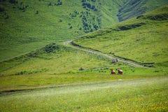Άλογα στο βουνό στοκ φωτογραφία