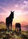 Άλογα στο ηλιοβασίλεμα Στοκ φωτογραφίες με δικαίωμα ελεύθερης χρήσης