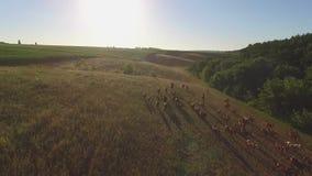 Άλογα στο λιβάδι απόθεμα βίντεο