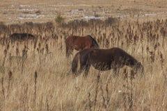 Άλογα στο πεδίο Στοκ εικόνες με δικαίωμα ελεύθερης χρήσης