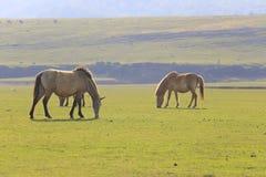 Άλογα στο πράσινο λιβάδι το καλοκαίρι Στοκ Φωτογραφία