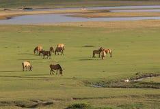 Άλογα στο πράσινο λιβάδι το καλοκαίρι Στοκ φωτογραφία με δικαίωμα ελεύθερης χρήσης