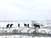 Άλογα στο χιόνι Στοκ φωτογραφία με δικαίωμα ελεύθερης χρήσης