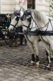 Άλογα της Βιέννης στοκ φωτογραφίες με δικαίωμα ελεύθερης χρήσης