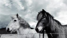 Άλογα το χειμώνα Στοκ Φωτογραφίες