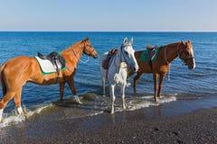 άλογα τρία παραλιών Στοκ εικόνες με δικαίωμα ελεύθερης χρήσης