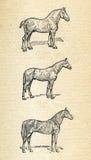 Άλογα, χαραγμένη τρύγος απεικόνιση απεικόνιση αποθεμάτων