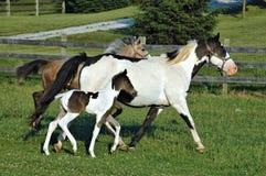 Άλογα 62 Στοκ Φωτογραφίες