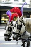 Άλογα Plumed που περιμένουν υπομονετικά Στοκ εικόνα με δικαίωμα ελεύθερης χρήσης