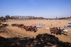 Άλογα Shongweni Hillcrest αναβατών λόγων πόλο Στοκ Εικόνες