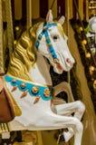 άλογο λίγα Στοκ Εικόνα