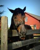 Άλογο & αγρόκτημα Στοκ φωτογραφίες με δικαίωμα ελεύθερης χρήσης