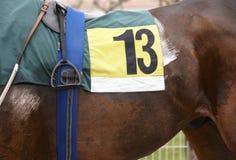 Άλογο αγώνων με τον αριθμό δέκα τρία στοκ εικόνες