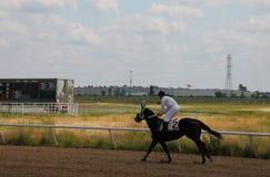 Άλογο αγώνων στη διαδρομή Στοκ εικόνες με δικαίωμα ελεύθερης χρήσης