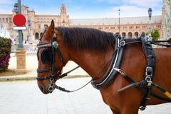 Άλογο Ανδαλουσία της Σεβίλης Σεβίλλη Plaza de Espana Στοκ εικόνες με δικαίωμα ελεύθερης χρήσης