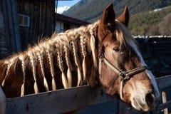 άλογο αρκετά Στοκ Φωτογραφία