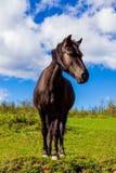 Άλογο βουνών Στοκ φωτογραφίες με δικαίωμα ελεύθερης χρήσης