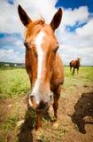 Άλογο επάνω στενό Στοκ Εικόνες