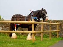 Άλογο εργασίας Στοκ Φωτογραφία