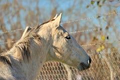 Άλογο ελεύθερο σε έναν τομέα στην Αργεντινή Στοκ φωτογραφίες με δικαίωμα ελεύθερης χρήσης