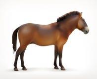 Άλογο, διανυσματικό εικονίδιο Στοκ φωτογραφία με δικαίωμα ελεύθερης χρήσης