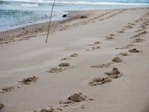 Άλογο ιχνών στην παραλία Στοκ φωτογραφίες με δικαίωμα ελεύθερης χρήσης