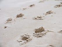 Άλογο ιχνών στην παραλία Στοκ εικόνες με δικαίωμα ελεύθερης χρήσης