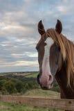Άλογο κάστανων που κοιτάζει πέρα από το φράκτη Στοκ φωτογραφίες με δικαίωμα ελεύθερης χρήσης
