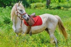 Άλογο κάστανων στη χλόη Στοκ Φωτογραφίες