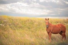 Άλογο και ένας θυελλώδης ουρανός στοκ φωτογραφία