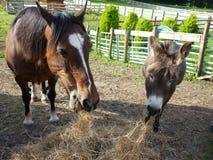 Άλογο και γάιδαρος Στοκ εικόνα με δικαίωμα ελεύθερης χρήσης