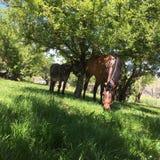 Άλογο και γάιδαρος Στοκ Φωτογραφία