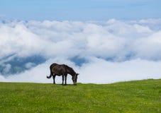 Άλογο και θάλασσα των σύννεφων στις κλίσεις του υποστηρίγματος Txindoki Στοκ Φωτογραφία