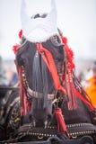 Άλογο και κόκκινες κορδέλλες Στοκ Εικόνα