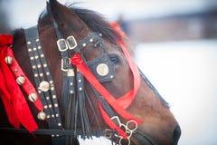 Άλογο και κόκκινες κορδέλλες Στοκ φωτογραφία με δικαίωμα ελεύθερης χρήσης