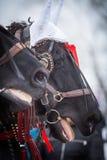Άλογο και κόκκινες κορδέλλες Στοκ εικόνες με δικαίωμα ελεύθερης χρήσης