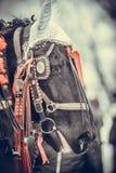 Άλογο και κόκκινες κορδέλλες Στοκ Εικόνες