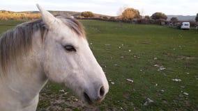 Άλογο και φύση Στοκ Φωτογραφία