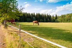 Άλογο και foal στο αγρόκτημα Στοκ φωτογραφία με δικαίωμα ελεύθερης χρήσης