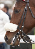 Άλογο και jockey αγώνων έτοιμα να τρέξουν Στοκ φωτογραφίες με δικαίωμα ελεύθερης χρήσης