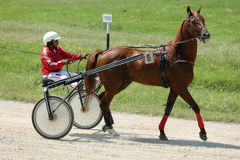 Άλογο κατά τη διάρκεια του αγώνα λουριών Στοκ Φωτογραφίες