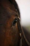 άλογο ματιών στοιχείων σχεδίου Στοκ Εικόνα