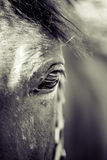 άλογο ματιών στοιχείων σχεδίου Στοκ Εικόνες