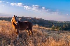 Άλογο με ένα άχυρο Στοκ εικόνα με δικαίωμα ελεύθερης χρήσης