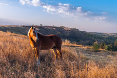 Άλογο με ένα άχυρο Στοκ Εικόνες