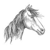 Άλογο με το Μάιν Πορτρέτο σκίτσων επιβητόρων μάστανγκ απεικόνιση αποθεμάτων